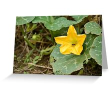 yellow flower in the garden Greeting Card
