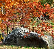 Rock and Fall Foliage by bannercgtl10
