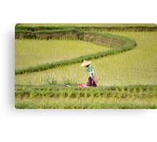 People working in the fields Canvas Print