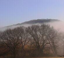 Foggy Scene by BarbWireNRoses