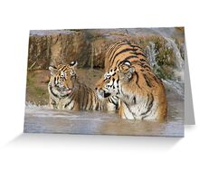 Tiger, Mother and Cub Greeting Card