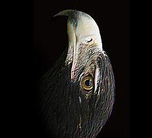 I phone eagle by UncaDeej