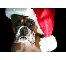 Christmas Boxer dog Photographic Print