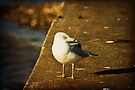 Seagull on the Edge by KBritt