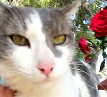Oreo in the Patio Smelling Roses by BingoStar
