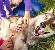 Siberian Husky dog Funny Portrait  by CebotariN