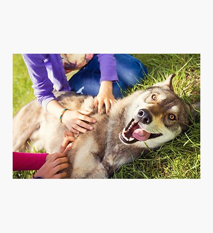 Siberian Husky dog Funny Portrait  Photographic Print