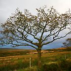 Lone Tree, Dartmoor National Park by Erland Howden