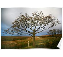 Lone Tree, Dartmoor National Park Poster