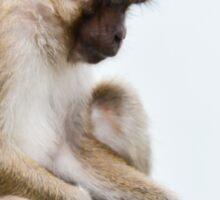 monkeys in the jungle Sticker