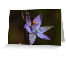 Thelymitra pauciflora Greeting Card