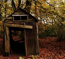 Old Shed in the Woods by Ms-Bexy