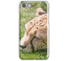 leopard at the zoo iPhone Case/Skin