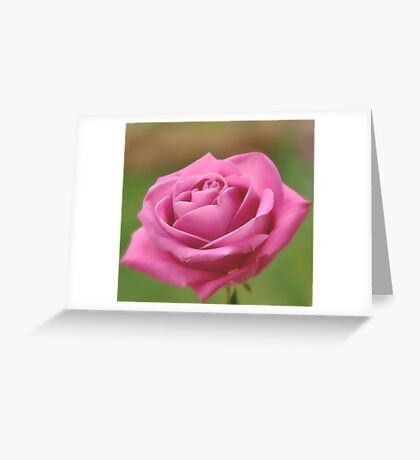 A rose for love. Greeting Card