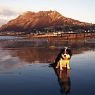 Reflections Of Laddie by Michael Haslam
