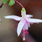 Pink Fushia by Joyce Knorz