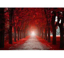 Red Autumn Photographic Print