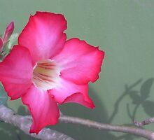 Desert Rose by yiching