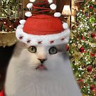 ✰˚ ˛★* 。 ღ˛°CHRISTMAS CAT~ BAH HUMBUG ✰˚ ˛★* 。 ღ˛° by ╰⊰✿ℒᵒᶹᵉ Bonita✿⊱╮ Lalonde✿⊱╮