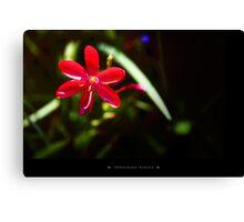 Flowers at Dandenong Ranges Canvas Print
