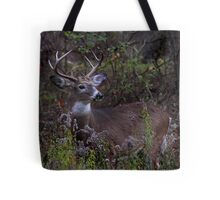 Young Prince 2011 - White-tailed Deer Tote Bag