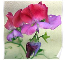 Be My Sweet Pea Poster