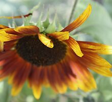 From the Sun, Down by Rachel Sonnenschein