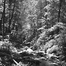 Anna Ruby Fall's Creek - Georgia by Glenn Cecero
