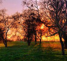 Evening Sun by Paul Thompson Photography
