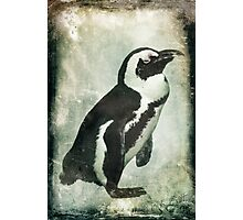 Penguin On Ice Photographic Print