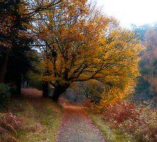 Rich Autumn by Bernard Cavanagh