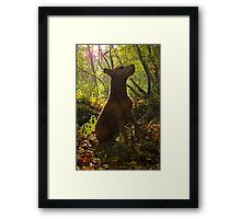 Observing from the undergrowth  Framed Print