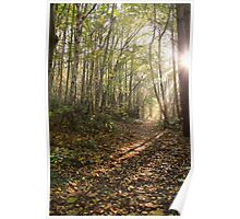 English Kentish woodland Poster