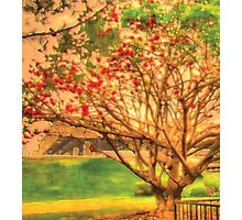 That's My Tree Photographic Print