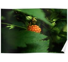 Wild Berry Poster