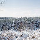 Winter Panorama by Ann Garrett