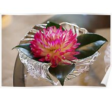 Pink Dahlia on Holly leaves Poster