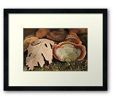Leaf and Fungi Framed Print
