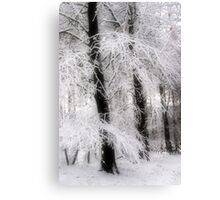 Snow on Sycamores Canvas Print