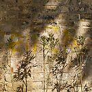 Graffiti and shadows on the wall of Alay Köskü (Parade Pavilion) by Marjolein Katsma