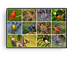 Birds of Various Feathers Canvas Print