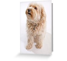 "Pet terrier ""Teddy"". Greeting Card"