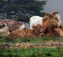 Let Sleeping Cows Lie by Debbie  Roberts