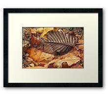 Leaves Along The Shore Framed Print