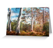 Shady Pond - The Cedars, Hahndorf, The Adelaide Hills, SA Greeting Card