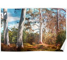 Shady Pond - The Cedars, Hahndorf, The Adelaide Hills, SA Poster