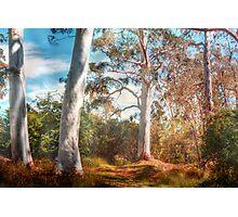 Shady Pond - The Cedars, Hahndorf, The Adelaide Hills, SA Photographic Print