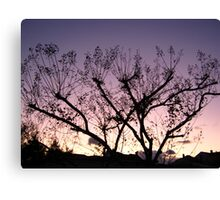 Cold Winter Sky 6 Canvas Print