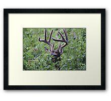 Velvet Buck Framed Print