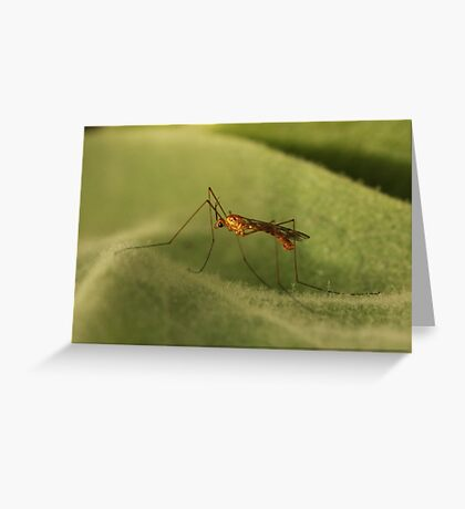 Crane Fly2 Greeting Card